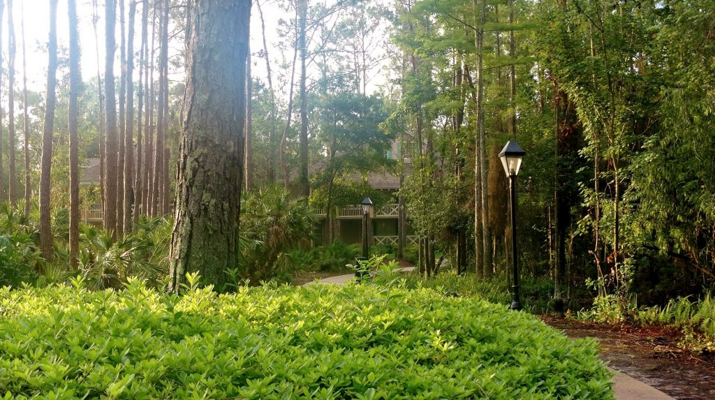 Remote path in the bayou of Disney's Port Orleans Resort - Riverside.